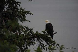 Eagle visitor